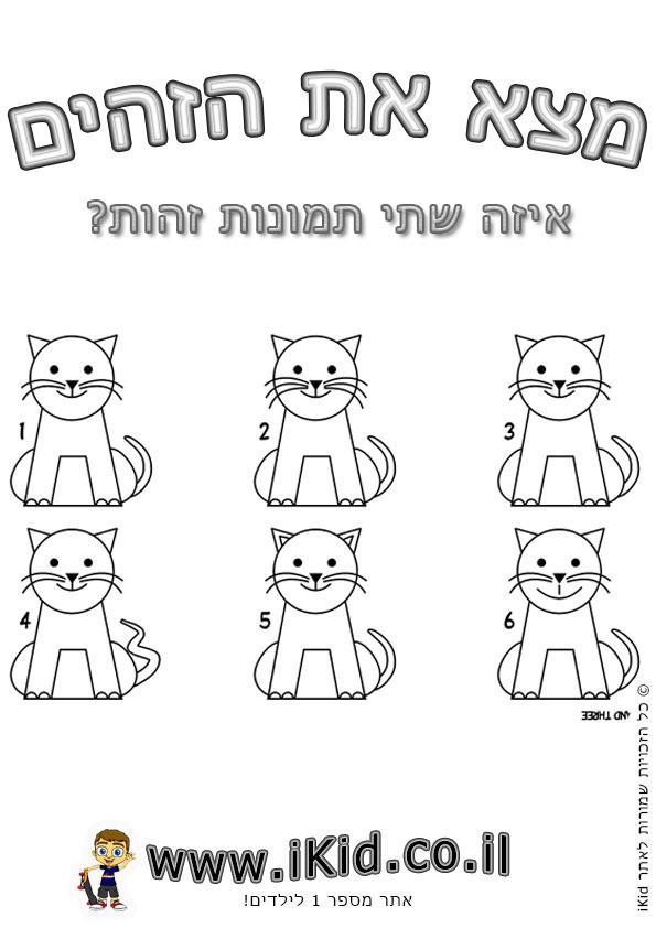 חתולים זהים