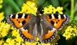 חוות הפרפרים - מעיין צבי