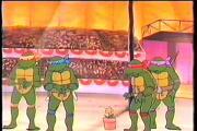 צבי הנינגה - הצבים המתכווצים