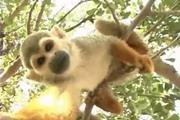 פארק הקופים - יער בן שמן