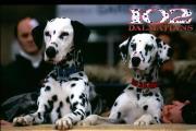 102 כלבים