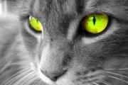 חתול עם עיניים זוהרות
