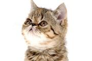 5 דברים שלא ידעתם על חתולים