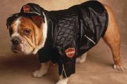 כלב בבגדים