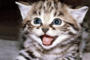 חתלתול שובב