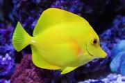 10 עובדות על דגים