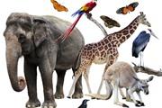 10 עובדות על חיות