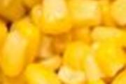 פשטידת תירס