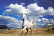 סוס לבן במדבר